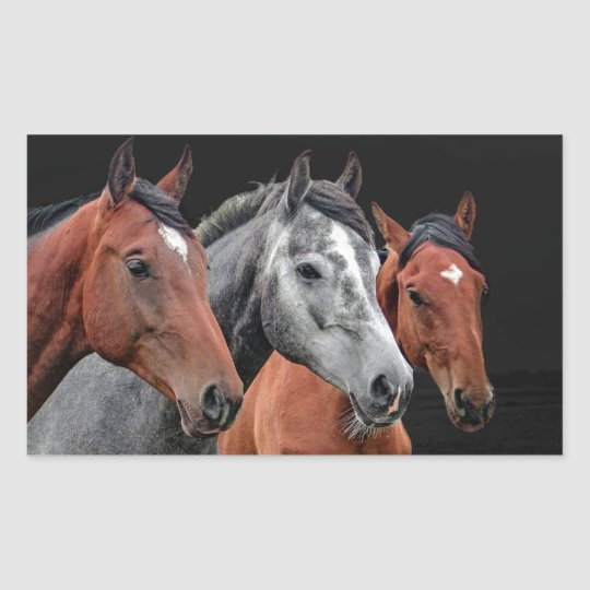 BEAUTIFUL HORSES PORTRAIT FOR HORSE LOVERS RECTANGULAR STICKER