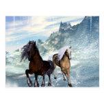 Beautiful horses postcard