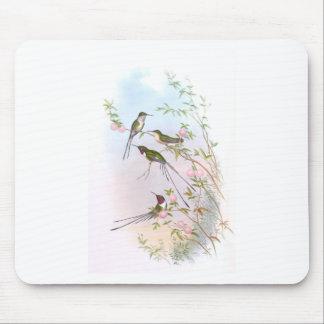 BEAUTIFUL HUMMINGBIRDS MOUSE MAT