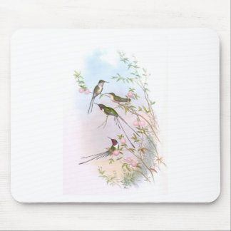 BEAUTIFUL HUMMINGBIRDS MOUSE PAD
