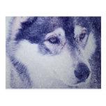 Beautiful husky dog portrait