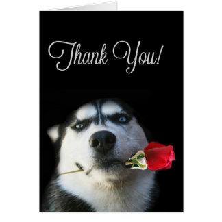 Beautiful Husky Dog Thank You Card