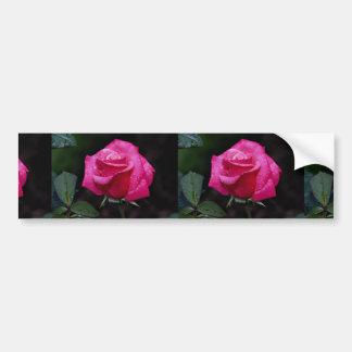 Beautiful Hybrid Tea Rose First Prize Bumper Stickers