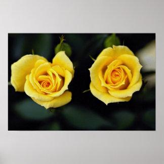 Beautiful Hybrid Tea Rose Oregold Print