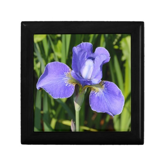 Beautiful iris floral print gift box