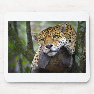 Beautiful jaguar relaxing in tree mouse pad