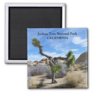 Beautiful Joshua Tree Magnet! Square Magnet