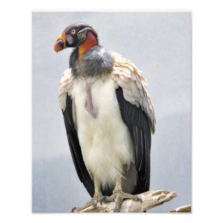 Beautiful King Vulture Art Photo