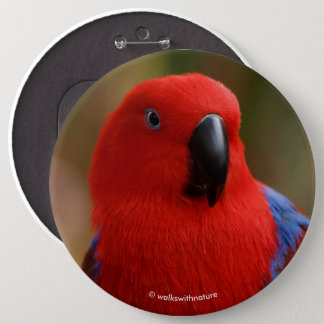 """Beautiful """"Lady in Red"""" Eclectus Parrot 6 Cm Round Badge"""