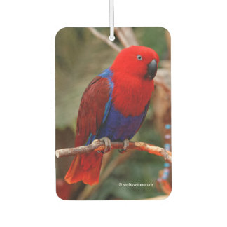 "Beautiful ""Lady in Red"" Eclectus Parrot Car Air Freshener"
