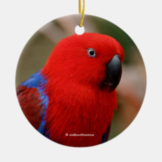 "Beautiful ""Lady in Red"" Eclectus Parrot Christmas Ornament"