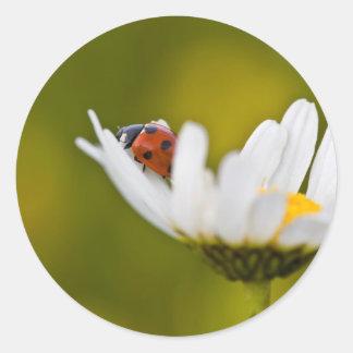 Beautiful Ladybird in Oxeye Daisy round sticker