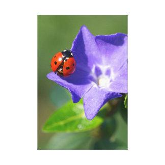 Beautiful Ladybug on Periwinkle Canvas