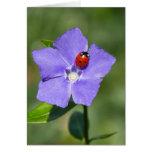 Beautiful Ladybug on Periwinkle Greeting Card