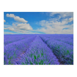 Beautiful landscape of lavender fields postcard