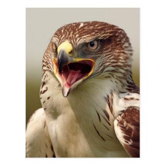 Beautiful Lanner Falcon Postcard