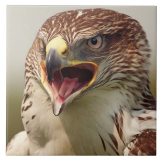 Beautiful Lanner Falcon Tile/Trivet Large Square Tile