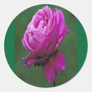 Beautiful Lavender-rose sticker