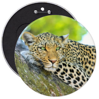 Beautiful leopard with green eyes 6 cm round badge