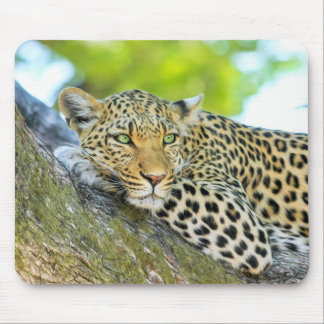 Beautiful leopard with green eyes mouse pads