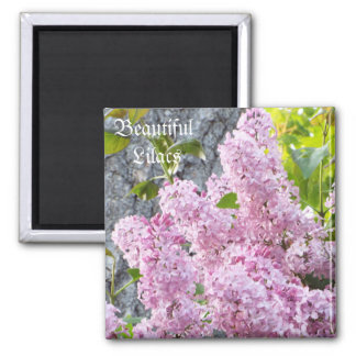 Beautiful Lilac's magnet
