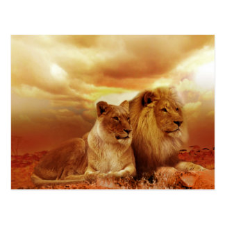 Beautiful Lion Couple Postcard