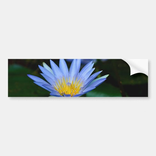 Beautiful lotus flowers and meaning bumper sticker