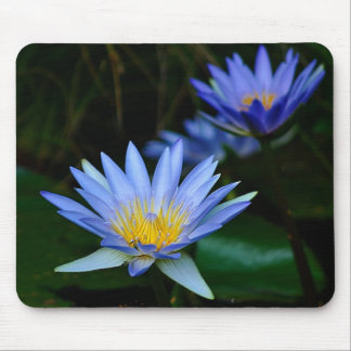 Beautiful lotus flowers and meaning mouse pad