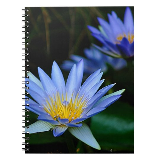 Beautiful lotus flowers and meaning spiral notebook