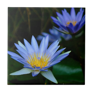 Beautiful lotus flowers and meaning tile