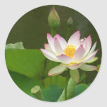 Beautiful Lotus Round Sticker
