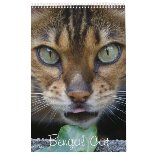 Beautiful Lovely Bengal Cats 2018 Calendars
