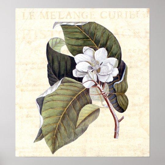 Beautiful Magnolia Blossom Antique Collage Poster