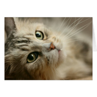 Beautiful Maine Coon Card