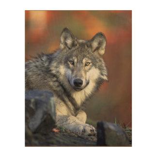 Beautiful Majestic Wolf Wildlife Woodland Wall Art