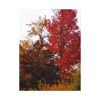 Beautiful Michigan in Autumn Canvas Print
