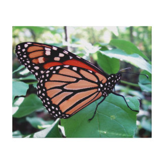 Beautiful Monarch Butterfly Canvas Print