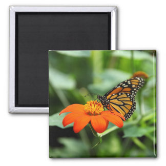Beautiful Monarch Butterfly on Flower Magnet