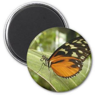 Beautiful Monarch Butterfly Photo Fridge Magnet