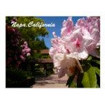 Beautiful Mont La Salle Postcard