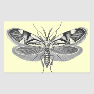 Beautiful moth pencil drawing rectangular sticker