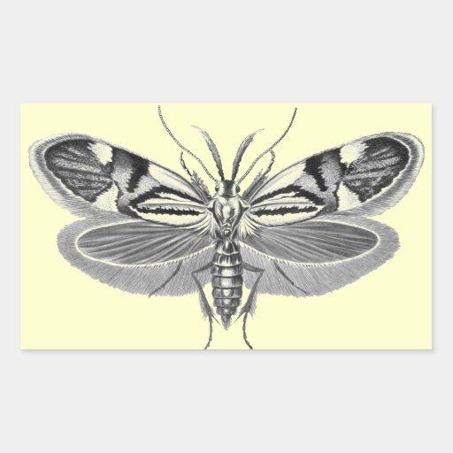 Beautiful moth pencil drawing rectangle sticker