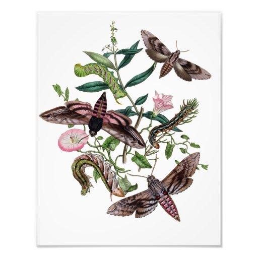 Beautiful Moths Caterpillars and Flowers Photographic Print