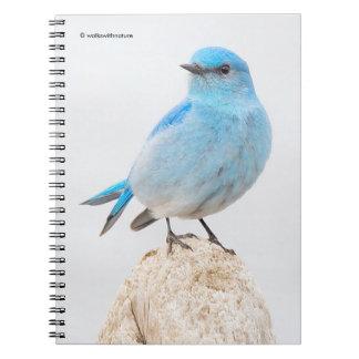 Beautiful Mountain Bluebird Notebooks