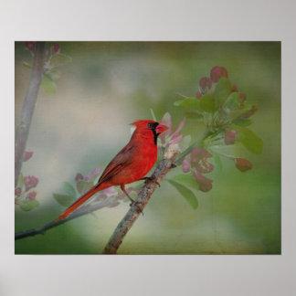 Beautiful Mr. Cardinal Print