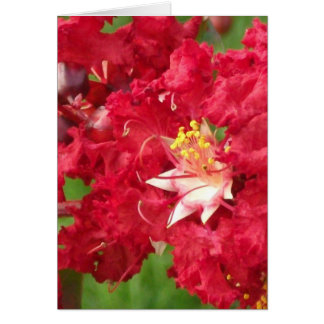 Beautiful Myrtle Abstract Greeting Cards