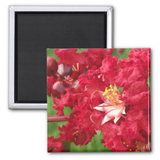 Beautiful Myrtle Abstract Fridge Magnets