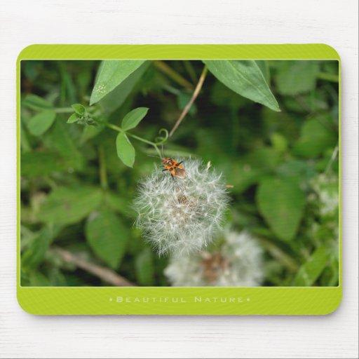 Beautiful Nature: bugs - Mousepad