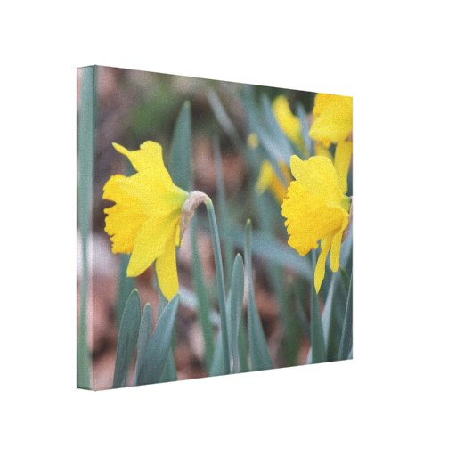 Beautiful nature canvas stretched canvas prints