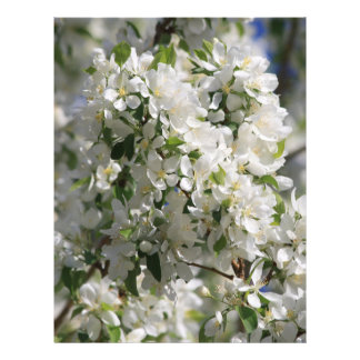 Beautiful Nature Photo Of White Apple Blossom Flyer